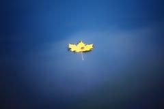 Het blad van de esdoorn op water Stock Foto