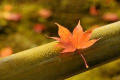 Het Blad van de Esdoorn van de herfst royalty-vrije stock afbeelding
