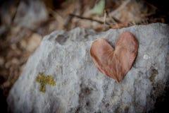 Het blad van de hartvorm Royalty-vrije Stock Afbeeldingen