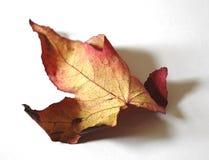 Het Blad van de herfst Royalty-vrije Stock Fotografie