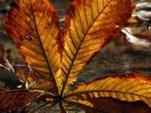 Het blad van de herfst royalty-vrije stock afbeeldingen