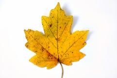 Het blad van de herfst? royalty-vrije stock afbeelding
