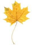 Het Blad van de herfst Stock Afbeeldingen