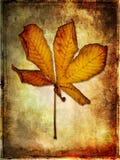 Het blad van de herfst vector illustratie