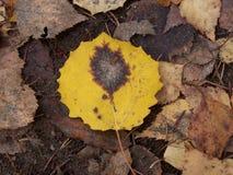 Het blad van de herfst De grootte van het beeld XXXL Stock Foto