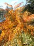 Het blad van de herfst De grootte van het beeld XXXL Royalty-vrije Stock Afbeeldingen