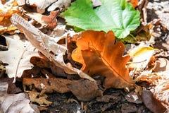Het blad van de herfst De grootte van het beeld XXXL Royalty-vrije Stock Fotografie