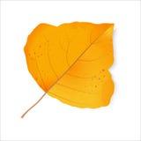 Het blad van de herfst De grootte van het beeld XXXL Het gebladerte van populier Royalty-vrije Stock Foto