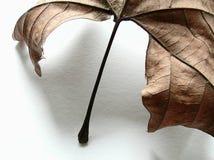 Het blad van de herfst, detail Royalty-vrije Stock Afbeeldingen