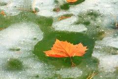 Het blad van de herfst en ijzig water Royalty-vrije Stock Foto