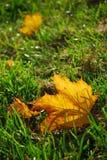 Het blad van de herfst in gras Royalty-vrije Stock Afbeeldingen