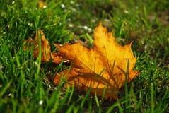 Het blad van de herfst in gras Stock Afbeeldingen