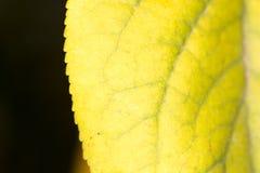 Het blad van de herfst De grootte van het beeld XXXL Close-up Royalty-vrije Stock Fotografie
