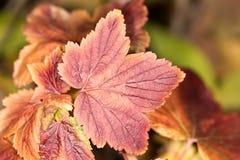 Het blad van de herfst De grootte van het beeld XXXL Close-up Stock Fotografie