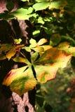 Het blad van de herfst met chiaroscuro stock foto