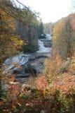 Het blad van de herfst op boomschors Stock Afbeelding