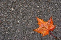 Het blad van de herfst op nat asfalt Stock Afbeeldingen