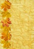 Het blad van de herfst op oud document Royalty-vrije Stock Afbeeldingen