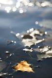 Het blad van de herfst op water Stock Foto