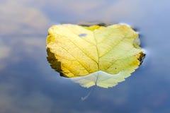 Het blad van de herfst op water Stock Afbeeldingen