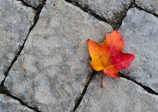 Het blad van de herfst tegen steentextuur Royalty-vrije Stock Afbeeldingen