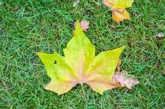 Het blad van de herfst ter plaatse Royalty-vrije Stock Afbeeldingen