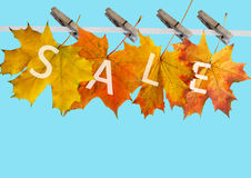 Het blad van de herfst voor verkoop Royalty-vrije Stock Foto