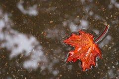 Het blad van de herfst in water Royalty-vrije Stock Afbeeldingen