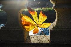 Het blad van de de herfstpaardekastanje royalty-vrije stock foto
