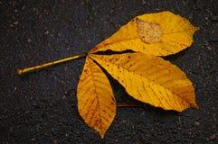 Het blad van de kastanje op asfalt Royalty-vrije Stock Fotografie