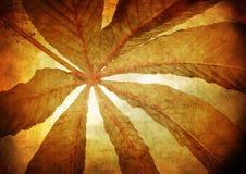 Het blad van de kastanjeboom - gestileerde wijnoogst Stock Foto
