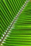 Het Blad van de kokosnoot stock fotografie