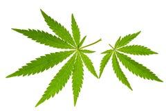 Het blad van de marihuana Stock Foto's