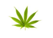 Het blad van de marihuana dat op witte achtergrond wordt geïsoleerdg Stock Afbeeldingen