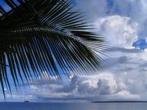 Het blad van de palm, overzees en cloudscape royalty-vrije stock fotografie