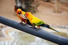 Het blad van de papegaaiengreep in de mond Royalty-vrije Stock Foto