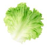Het blad van de salade Royalty-vrije Stock Fotografie