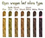 Het blad van de sigarenomslag kleurt types: Claro, Dubbele Claro, Colorado Claro, Colorado, Colorado Maduro, Maduro en Oscuro vector illustratie
