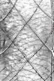 Het blad van de textuur stock illustratie