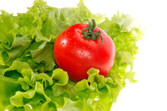 Het blad van de tomaat en van de salade stock foto