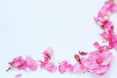 Het blad van het document met roze oleander Stock Fotografie