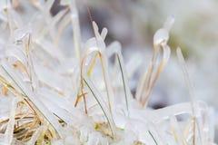 Het blad van het Freezedgras. Seylandfoss, IJsland Royalty-vrije Stock Afbeeldingen