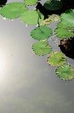 Het blad van Lotus Royalty-vrije Stock Afbeelding