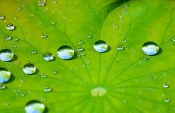 Het blad van Lotus met waterdaling