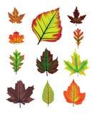 Het blad vectorreeks van de herfst Stock Foto's