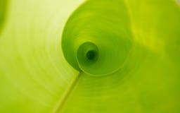 Het bladachtergrond van de banaan Stock Fotografie