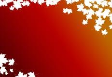 Het bladachtergrond van de esdoorn Stock Fotografie