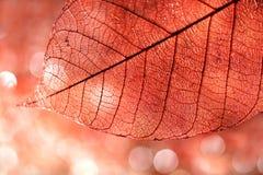 Het bladachtergrond van de herfst Stock Foto
