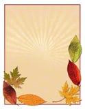 Het bladachtergrond van de herfst Stock Foto's