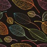 Het bladachtergrond van de herfst Heldere gele, oranje, rode, gouden kleuren van de bladeren van de Esdoorn op boomtak, backlit d Stock Afbeelding